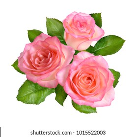 Composition of Pink rose flowers. Isolated on white background.