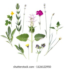 Composition of plants and flowers on a white background. Medicinal spicy aromatic herbs. Flat lay, top view