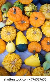 composition of pumpkins