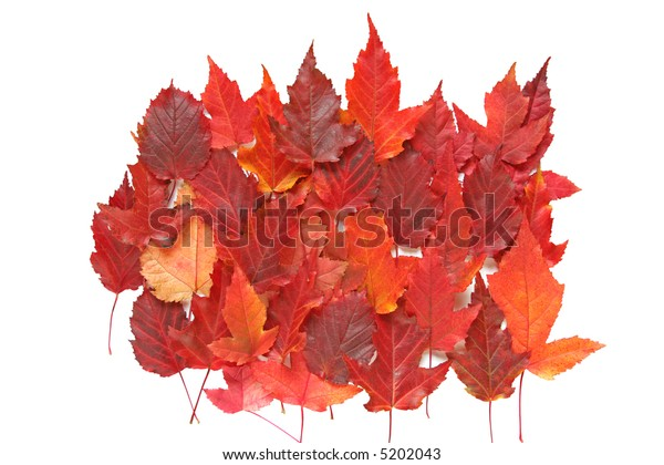 Composition of red autumn leaves on white background.