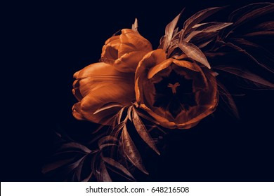 Composition of red tulips and foliage of peonies on a dark background.