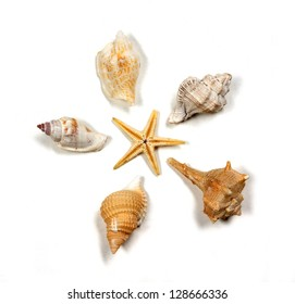 composition of seashells in white background