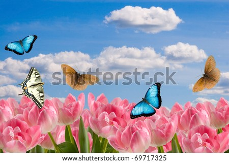 Composition Spring Flowers Butterflies On Background Stock Photo