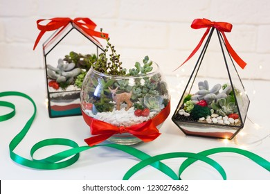 •Florarium - composition of succulents, stone, sand and glass, element of interior,  home decor,christmas deror, new year present