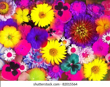 Composition from summer flowers