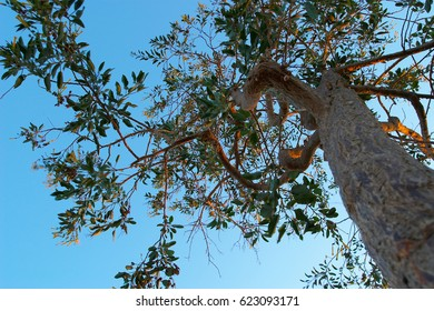 Composition of a tree to back lighting