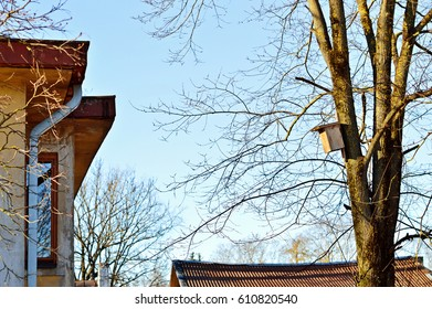 Composition with a tree, a birdhouse and an element of the house