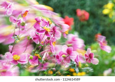 Composition of wind-driven and still flowers in pinks, lilacs and yellows