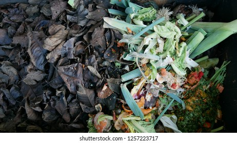compost dechet green