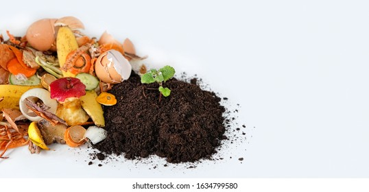Compost from fruits, vegetable scraps and plant sprout in ground. waste for recycling. Food waste, Environmentally responsible behavior concept. copy space