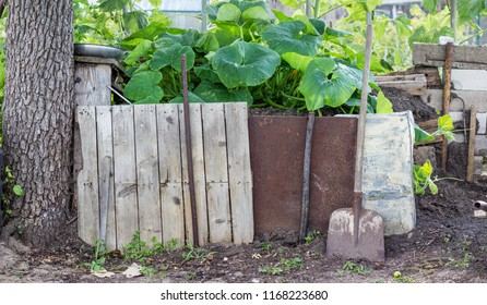 compost heap with pumpkin plants