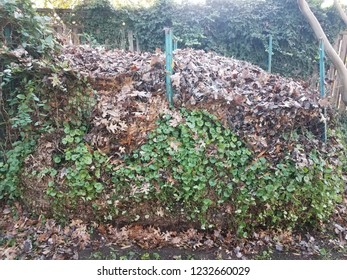 compost pile filled with brown leaves and weeds