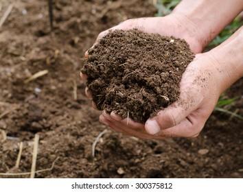 Compost soil, Organic plant fertilizer on hand for plantation