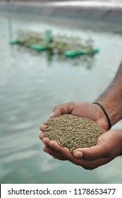 Compound pelletised shrimp feed of black tiger prawn (P. monodon) in the hands of technician standing in the farm with green paddle wheel in the background