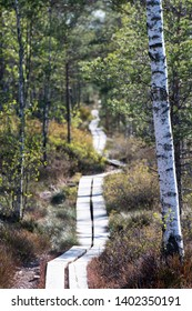 Compressed photograph of Marsh and bog national park hiking trail in Swedish lowlands - Store Mosse National Park Smaland Sweden.