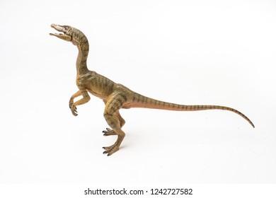 Compsognathus  Dinosaur on white background  .