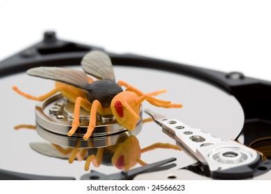 computer bug concept - bug on a hard disk studio isolated