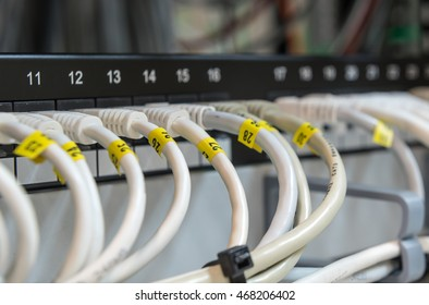 Computer Ethernet data Cables connected in a row on a data patch panel port to provide connectivity to a Network.