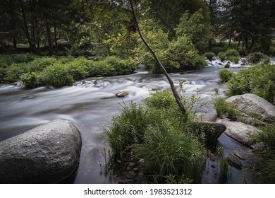 Río con vegetación en naturaleza
