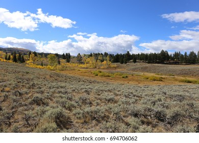 Concentrated area of yellowing trees and shrubs surrounded by sage brushes and pine trees