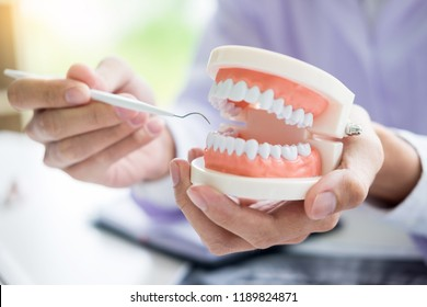 Concentrated dentist sitting at table with jaw samples tooth model in dental office professional dental clinic.