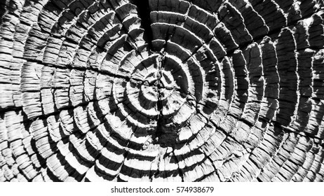 Concentric Rough-hewn end of a highway post in Pasadena, California
