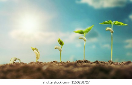 concept agriculture planting seeding growing step with blue sky and sunlight