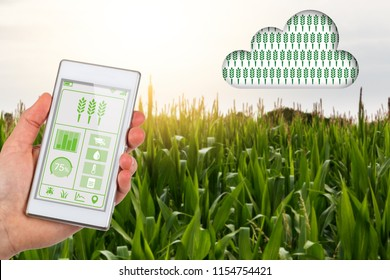 Concept for agritech of farmer with app on smartphone linking to cloud data about their field of crops on a smart farm.
