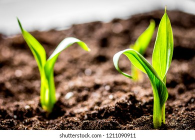 Concept appearance of life - sprout from soil close up