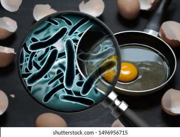 The concept of bacteria in the egg and is magnified by a magnifying glass salmonellosis infection