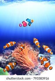 Concept - to be yourself, to be unique. A flock of standard clownfish and one colorful fish. On sunny underwater background. Copy space for text
