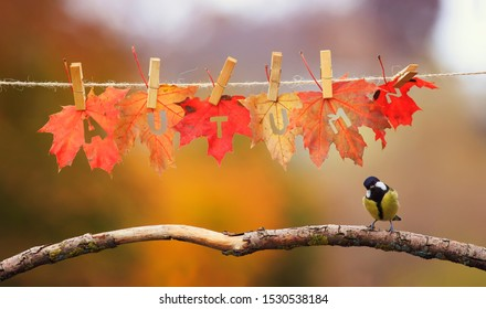 concept with bird tit stands on a branch in the garden under a banner with the word autumn carved on red maple leaves on clothespins and rope on a Sunny day