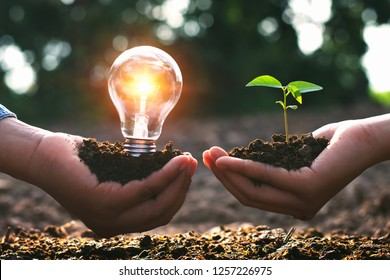 concept clean energy in nature. hand holding light bulb and small tree with sunrise