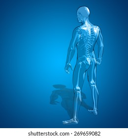 Concept or conceptual 3D human man or male skeleton anatomy transparent body over blue gradient background, metaphor to medical, health, science, biology, bone, joint, healthy, structure or healthcare