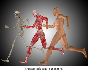 Concept conceptual 3D illustrstion of a human man with bones for anatomy, medicine or health, gray background, made of a skeleton and body as in a x-ray, metaphor to education, sport or medical design