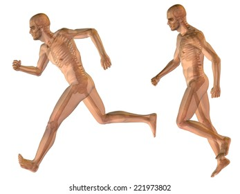 Concept or conceptual 3d male or man running over a black background as a metaphor for anatomy, body, biology, medicine, muscle, bones, muscular, anatomical, science, education, sport or x-ray