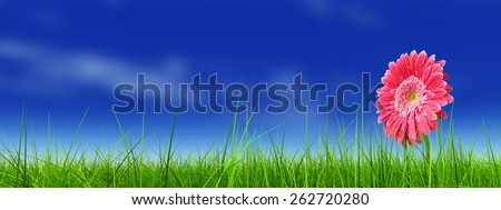 Concept or conceptual green fresh summer or spring grass field and a flower over a blue sky background, metaphor to nature, season, rural, farmland, outdoor, environment, pasture, growth conservation
