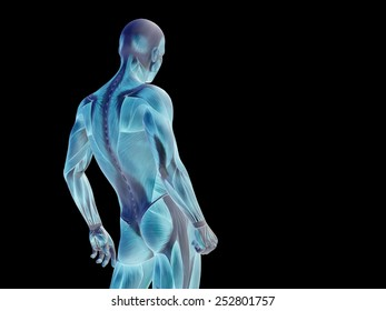 Concept or conceptual human or man 3D anatomy body with muscle over black background, metaphor to medicine, sport, male, muscular, medical, health, medicine, biology, anatomical, strong fitness design