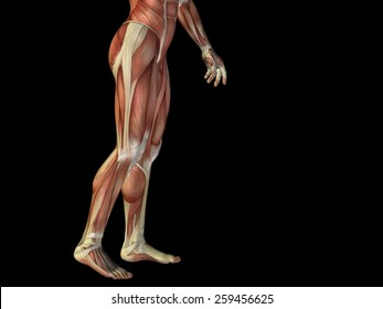 Concept or conceptual human or man 3D anatomy body with muscle isolated on background, metaphor to medicine, sport, male, muscular, medical, health, medicine, biology, anatomical strong fitness design