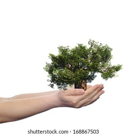 Concept or conceptual human man or woman hand holding a green summer tree isolated on white ecology background,metaphor to environment,growth,eco,protection,conservation,organic,bio,love,energy design
