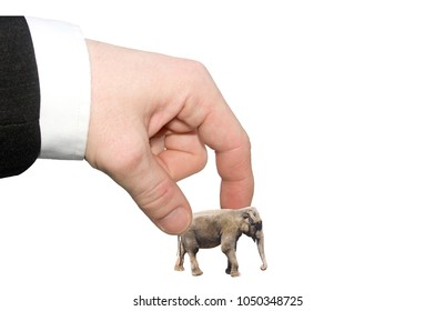 The concept of confidence in your business strategy. Hand in business suit holding a small elephant