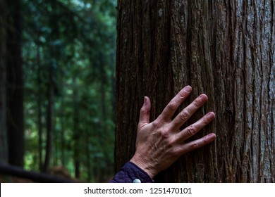 concept for connecting with nature using a hand touching a large tree with the woods in the background