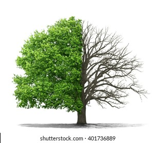 Concept of doubleness. Dead tree on one side and living tree on the different side. Isolated on a white background.