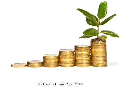 concept of economic growth. Sprout of ficus on piles of coins. on a white background
