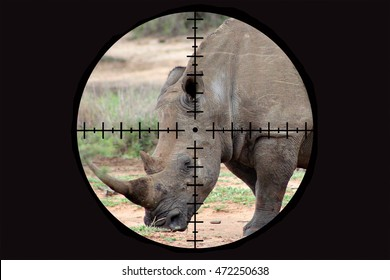 Concept of an endangered white rhino seen in the crosshairs of the scope of a poacher's rifle.