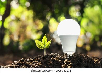 concept energy saving lightbulb with plant growing and sunshine