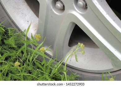 The concept of environmental protection, car wheel on the fresh green. Environmental Protection.