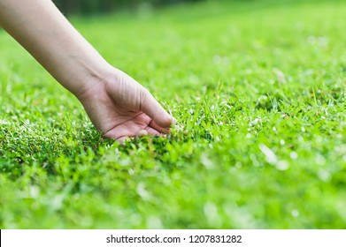 Concept of Environment,Natural Touch,Hand touches the Green grass in nature,Environmental protection,copy space for text