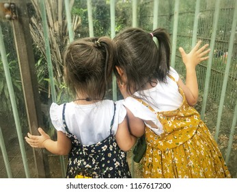 Concept of family time and education in the zoo. Funny and happy little two asian kids toddler girls (3-5 years old) standing and looking through glass at to a big lion in the cage.