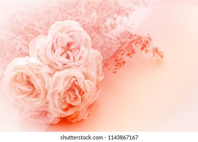 Concept for the festival of love,sweet petals color of rose flowers in soft blur background for valentine day